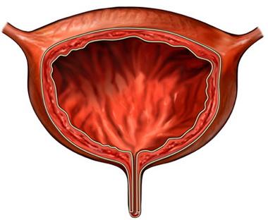 Гомеопатия меридиана мочевого пузыря