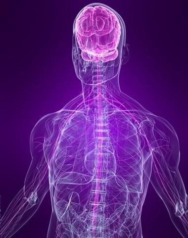 Нервная система и органы чувств